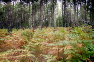 foret messange - 23_HDR-edit.jpg