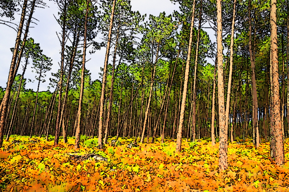 foret messange - 34-edit.jpg