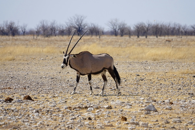 Namibie Sony - 1 - 114 - final.jpg