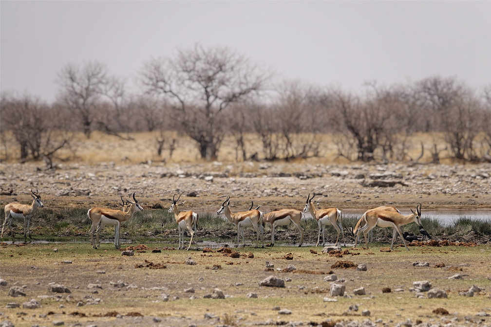 Namibie Sony - 1 - 201 - final.jpg